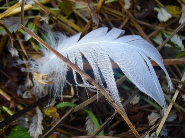Jeannine's feathers